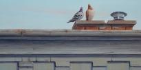 Ontario Street Sentinels, Deborah Pryce (Sold)